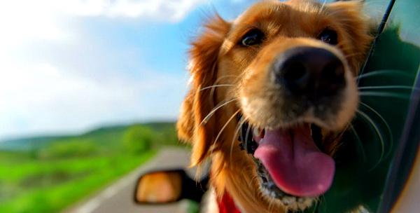 Ceva Saúde Animal marca presença na 1ª Parada Pet